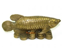 Brass Feng Shui Arowana on Treasure