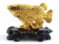 Golden Arowana to Attract Wealth