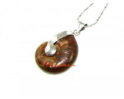 Ammonite Shell Pendant (S)