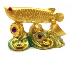 Arowana on Bed of Wealth