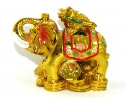 Money Frog on Elephant