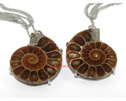 A pair of Halved Ammonite Couple Pendants in Frame
